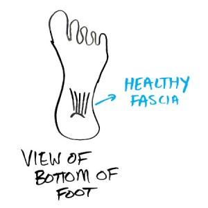 healthy-plantar-fascia