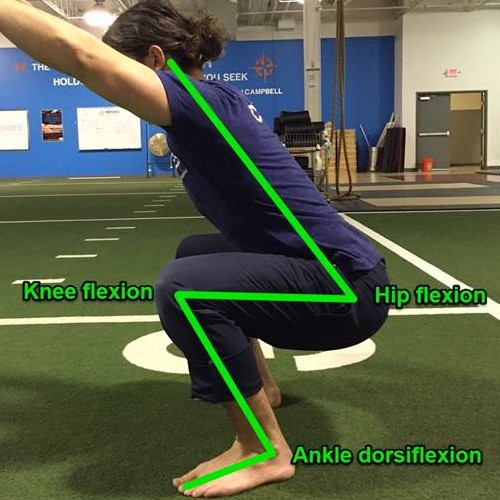 ankle-dorsiflexion-during-squat