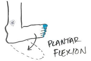 ankle-plantar-flexion