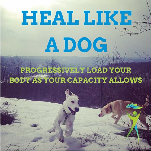 Heal-like-a-dog
