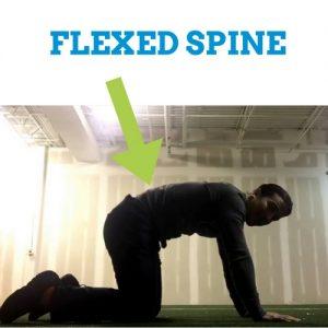 Cat-Cow-Flexed-Spine