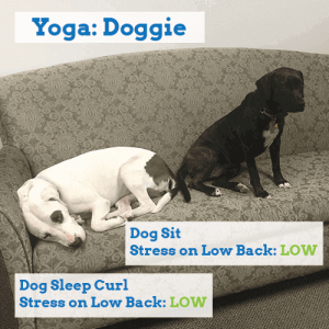 yoga-for-back-pain-dogs